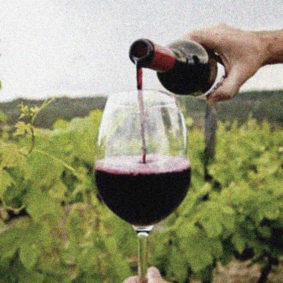 Foto de uma taça de vinho sendo servida entre os parreirais